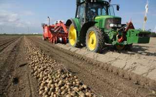 Как повысить урожайность картофеля с 1 га