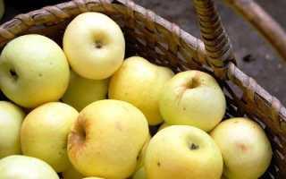 Антоновка обыкновенная: описание сорта, советы по выращиванию яблони
