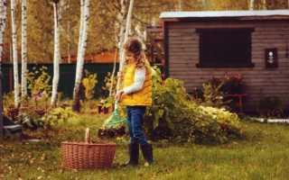 Осенний компост – гарантия обильного сада