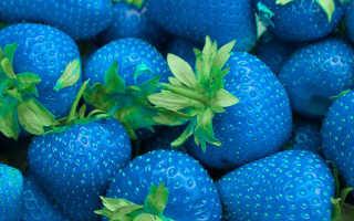 Существует ли сорт клубники синего цвета