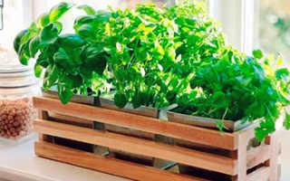 Преимущества и методы выращивания растений на гидропонике