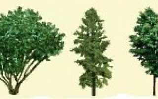 Выбираем деревья для будущего сада