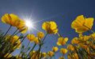 Цветы: основные разновидности и их названия