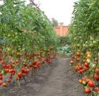 Как правильно посадить помидоры в грунт
