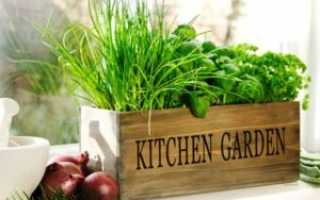 Выращивание зелени на подоконнике круглый год