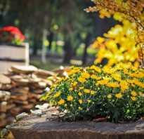 Календарь садово-огородных работ на сентябрь