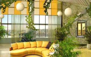 Вьющиеся комнатные растения: виды и уход в домашних условиях