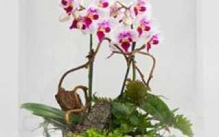 Выбираем растения для флорариума