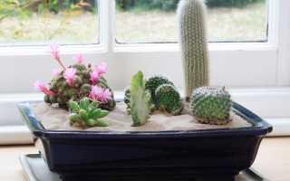 10 самых эффектных комнатных растений из пустыни