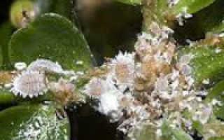 Топ-7 вредителей комнатных растений, методы борьбы с насекомыми