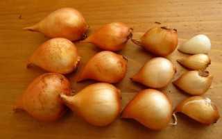 В каком месяце осенью сажают тюльпаны: сроки и технология посадки
