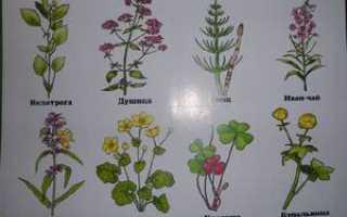 Какие бывают виды трав и растений