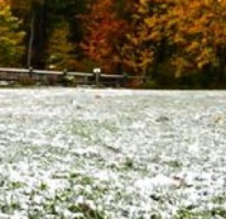 Готовим газон к зиме