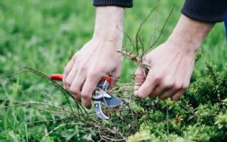 Ремонт газона, борьба с сорняками и другими проблемами