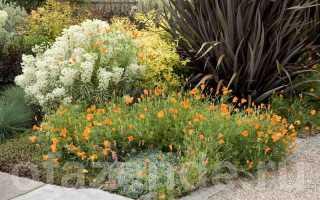 Самые броские вечнозелёные растения для сада