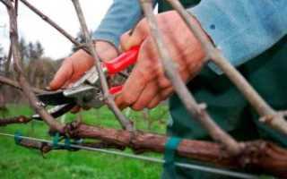 Как правильно нужно обрезать виноград на зиму