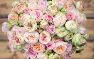 Пионовидные кустовые розы: обзор распространённых сортов