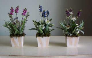 Какие цветы нельзя держать дома и почему