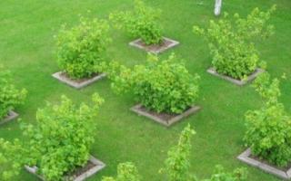 Планировка фруктово-ягодного приусадебного сада