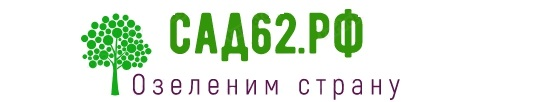 сад62.рф